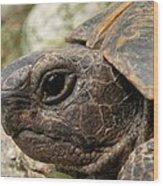 Tortoise Portrait In Macro Wood Print