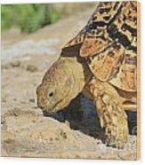 Tortoise Pose Wood Print