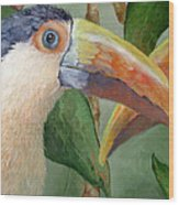 Toucans Wood Print