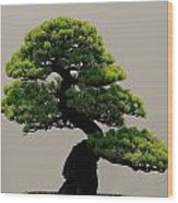 Touch Of Bonsai Wood Print
