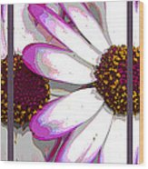 Touch Of Pink Osteospermum Trio Sample Wood Print