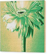 Touch Of Turquoise Zinnia Wood Print