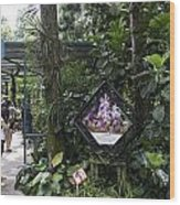 Tourist Doing Photography And Viewing Plants In A Garden Wood Print