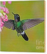 Tourmaline Sunangel Hummingbird Wood Print