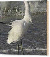 Tousled Egret Wood Print