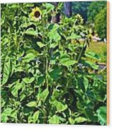 Towering Sunflowers Wood Print