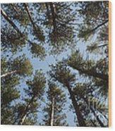 Towering White Pines Wood Print