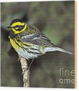 Townsends Warbler Wood Print