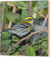 Townsends Warbler In Tree Wood Print