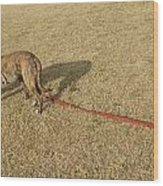 Tracking The Rabbit Wood Print