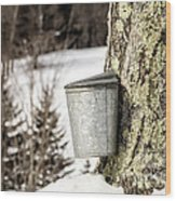 Traditional Sap Bucket On Maple Tree In Vermont Wood Print