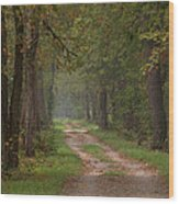 Trail Along The Canal Wood Print