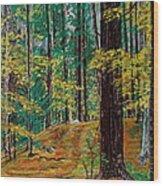 Trail At Wason Pond Wood Print by Sean Connolly