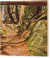 Trail In A Forest, Muskoka, Ontario Wood Print