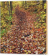 Trail In Fall Forest Wood Print