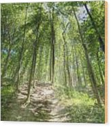 Trail In The Forest Wood Print