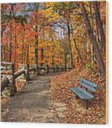 Trail Of Gold Wood Print