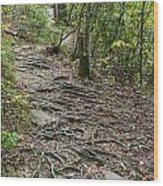 Trail Of Roots Wood Print