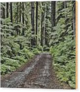 Trail To Jaw Bone Flats Wood Print