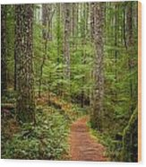 trail to Lower Lewis Falls Wood Print