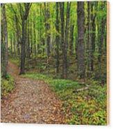 Trail To Miners Falls Wood Print