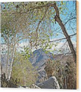 Trailhead Area In Andreas Canyon In Indian Canyons-ca Wood Print