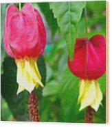 Trailing Abutilon Or Lantern  Flower Wood Print