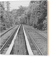 Train Tracks Running Through The Forest Wood Print