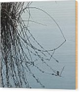 Tranquil Reeds Wood Print