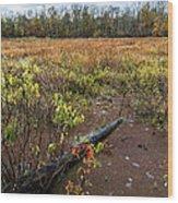 Transcending To Autumn Wood Print
