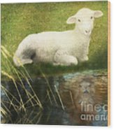 Transformation Lamb Or Lion Wood Print