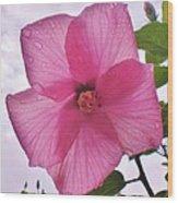 Translucent Flower After The Rain Wood Print