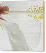 Transparent Hibiscus Wood Print