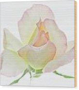 Transparent Rose 1 Wood Print