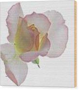 Transparent Rose 2 Wood Print