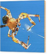 Trapeze Spider Wood Print by Christina Rollo
