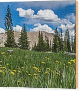 Trappers Lake Meadow Wood Print