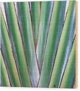 Travelers Palm 3 Wood Print