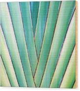 Travelers Palm 6 Wood Print