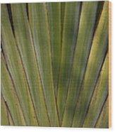 Traveller's Palm Patterns Dthb1542 Wood Print