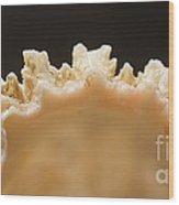 Treasures Of The Ocean 1 Wood Print