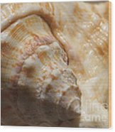 Treasures Of The Ocean 2 Wood Print