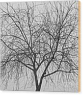Tree Abstract In Black And White Wood Print