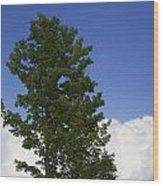 Tree Against A Cloudy Blue Sky In Vermont Wood Print