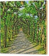 Tree Alley In Castle Park Wood Print