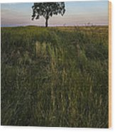 Tree Alone Wood Print