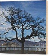 Tree And Borromee Islands Wood Print