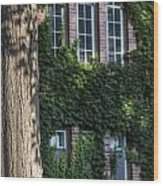 Tree And Ivy Windows Michigan State University Wood Print
