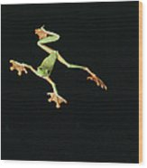Tree And Leaf Frog Jumping Wood Print