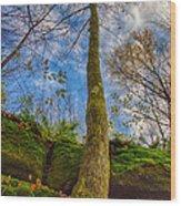 Tree And Rocks Wood Print